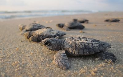 How You Can Easily Protect Turtle Habitat